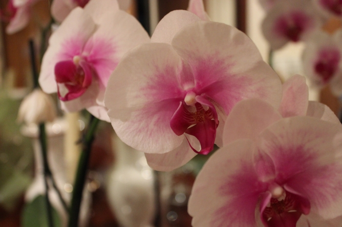 24. Orquídea