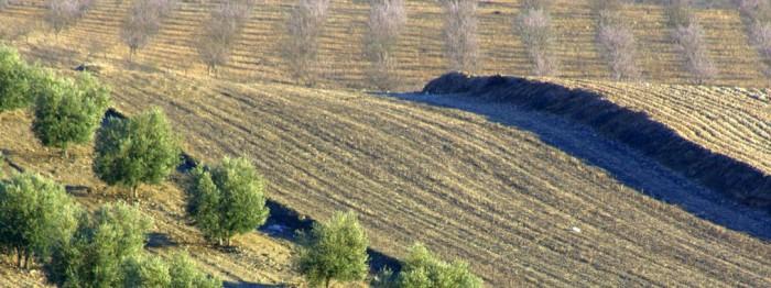 la-temperatura-del-suelo-afecta-a-la-absorcion-del-agua-de-los-arboles_image_380