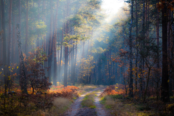 los-bosques-valen-cinco-veces-mas-de-lo-que-cuestan_image_380