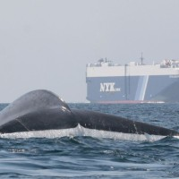 No choques contra la ballena