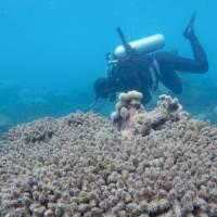 Los corales se blanquean