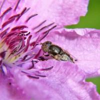 ¿De verdad los insecticidas dañan a las abejas?